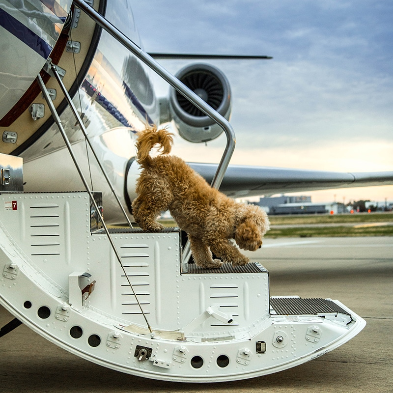 Dog walking down the steps of a private jet charter in Texas