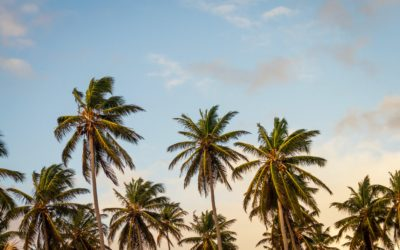 Summer Heat Destinations with Your Premier Private Jet Charter Company