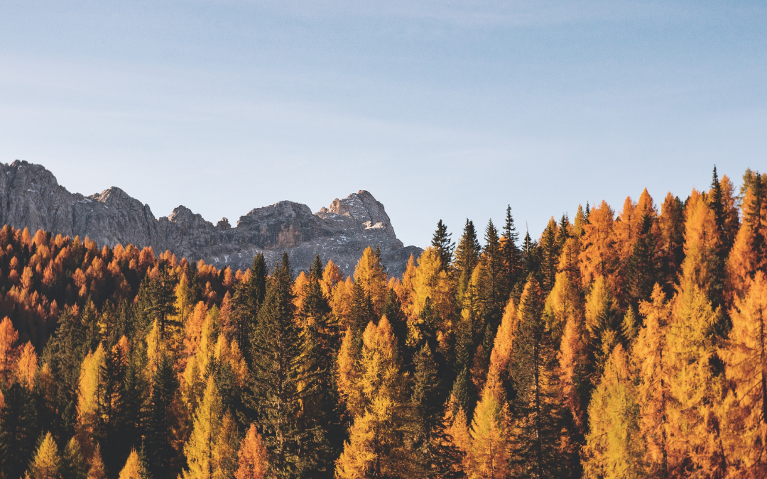 The Best US Fall Color Destinations for Hiking & Autumnal Hues